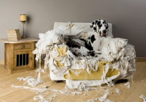 Zabawki rozwijające instynkty psów