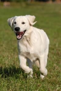 Trening z obrożą PetSafe